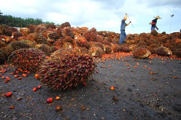 Palmöl Industrie